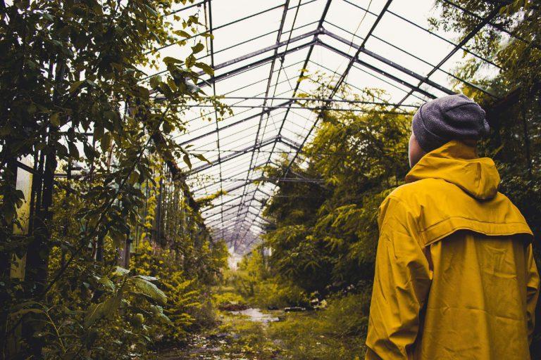 greenhouse yellow raincoat