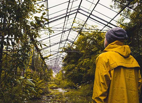 greenhouse yellow raincoat